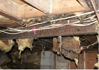 crawl space mold removal mold testing remediation